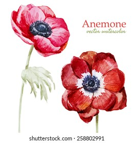 watercolor, flowers, anemones, composition