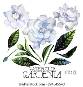 Watercolor gardenia set. Vector design elements isolated on white background