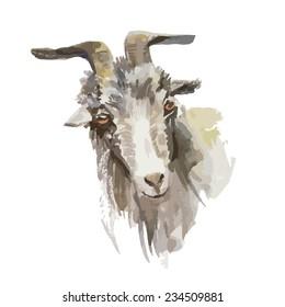 watercolor goat