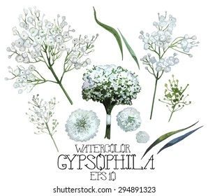 Watercolor gypsophila set. Vector design element isolated on white background