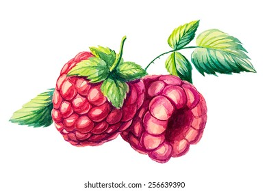 watercolor hand draw vector raspberry