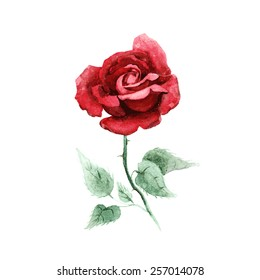 Watercolor hand drawn vector rose.