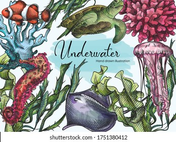 Watercolor Hand-drawn sketch set of Underwater creatures drawn with blue pen on a white background. Ocean life. Aquarium plants and animals. Coral, turtle, jellyfish, sea weed, crampfish