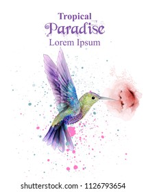 Watercolor humming bird Vector. Tropic paradise colorful birds. colorful paint stains splash