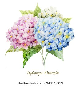 watercolor, hydrangea, flowers, bouquet