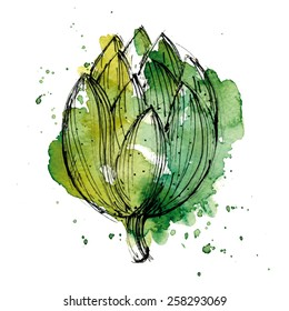 Watercolor illustration of artichoke. High quality EPS.