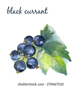 Watercolor illustration of a black currant on a white background. Vector element for your design.
