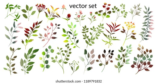 Watercolor illustration. Botanical collection of wild and garden plants. Set: leaves, flowers, branches, herbs and other natural elements.