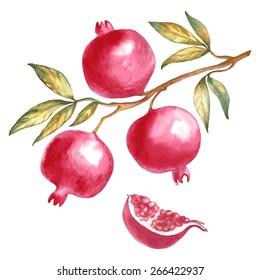 Watercolor illustration of a branch pomegranate.Sliced pomegranate.