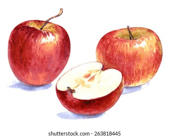 Watercolor illustration of cut and whole red apples Vector isolated on the white background