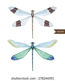 watercolor illustration of a dragonfly, isolated vector