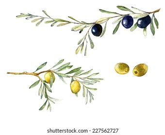 Watercolor illustration with green and black olives and olive branch