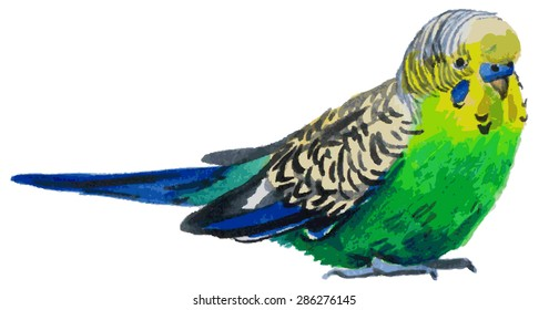 Watercolor illustration on a white background Green wavy parrot bird