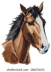 Watercolor illustration on a white background head of a brown horse