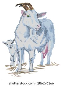 Watercolor illustration on a white background next to a goat kid