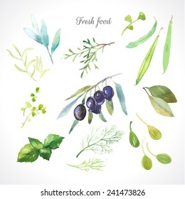Watercolor illustration of a painting technique. Fresh organic food. Set of different herbs. Olives, rosemary, sage, tarragon, capers, dill, beans and bay leaf