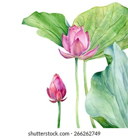 Watercolor Illustration Two Lotus. Vector.
