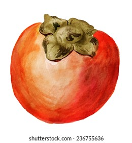 Watercolor image of date-plum on white background. Vector eps8