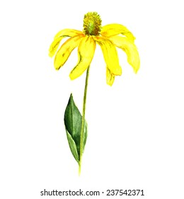 Watercolor image of yellow flower on white background. Vector eps8