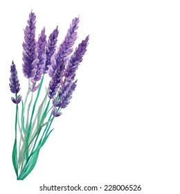 Watercolor lavender bouquet background. Frame with hand painted vintage plants. Vector illustration.