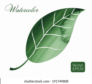 Watercolor leaf. Hand drawn on wet paper. Vintage style. Vector illustration.