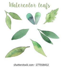 Watercolor leafs in vector