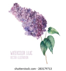 Watercolor lilac branch. Hand drawn botany art with purple flowers, leaves. Vector illustration isolated on white background