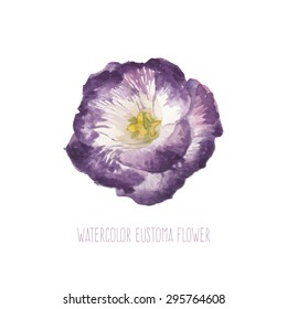 Watercolor Lisianthus Hand Drawn Botany Art With Single Pink Rose Flower Vector Illustration Isolated