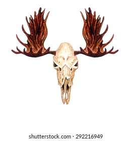 Watercolor Moose Skull, isolated on white background. Vector Element for your design. Hand drawn illustration.