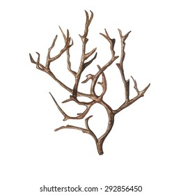 Watercolor Old Tree without leaves, isolated on white background. Bare tree, bough & snag. Vector Element for your design. Hand drawn illustration.