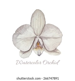 Watercolor Orchid flower. Isolated botany illustration on white background. Vector object