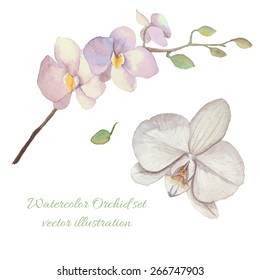 Watercolor Orchid flowers set. Isolated botany illustrations on white background: single flower, orchid branch, bud. Vector hand drawn objects