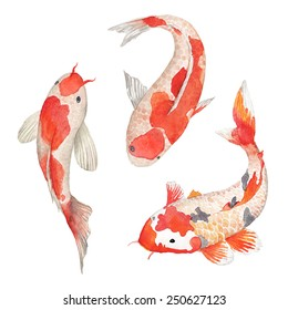 Chinese Fishes