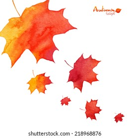 Watercolor painted orange vector maple leaves fall
