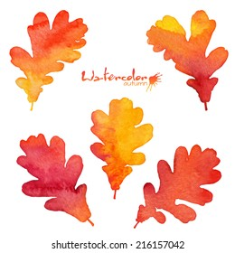 Watercolor painted vector oak leaves