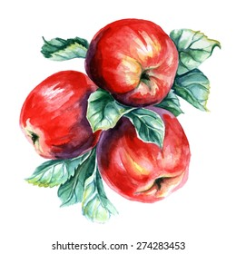 Watercolor painting of branch with apples. Vector illustration on white background