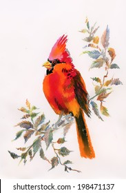 Watercolor painting of cardinal bird sitting on a branch vector