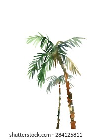 watercolor palm, hand draw,isolated on white background, vector illustration