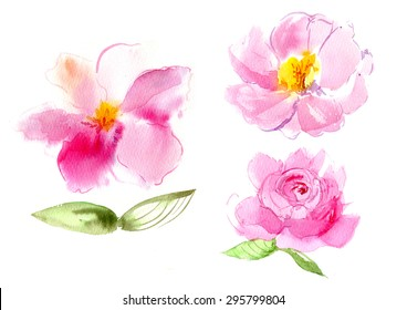 Watercolor of peonies