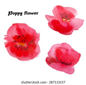 Watercolor poppies. Isolated. Vector illustration on white background