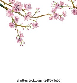 Watercolor sakura frame. Background with blossom cherry tree branches. Hand drawn japanese flowers on white background. Vector illustration