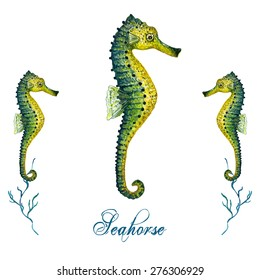 Watercolor Seahorse isolated on white background. Tropical fish card, postcard & invitation. Elegant concept for Aquarium, Swimming Lessons, Diving courses & Eco Tourism. Element for your design.