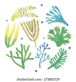 Watercolor seaweeds set