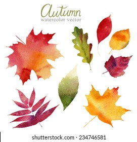 Watercolor set of beautiful colourful autumn leaves in vector