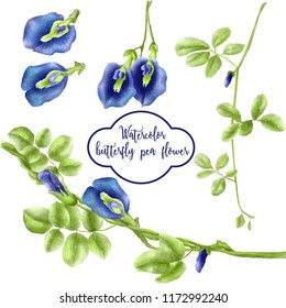 watercolor set of butterfly pea flower