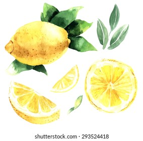 Watercolor set of lemons. Lemon segments, juicy lemon. Vector illustration
