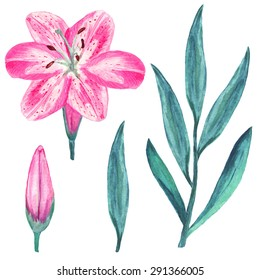 Watercolor set pink lily flower, bud, branch, green leafs closeup isolated on white background. Hand painting on paper