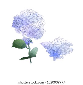 Watercolor style branch of hydrangea flowers. Set of  Isolated florals object on white background. Vector illustration. Editable element for design