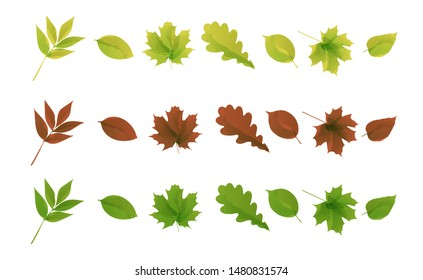 Watercolor style forest leaves collection. Autumn vector isolated leaves set on the white background.