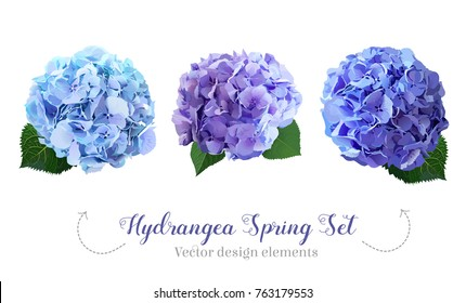 Watercolor style hydrangea flowers set. Glacier blue, violet lilac, purple colored. Vector illustration for simple, natural spring floral wedding design. All elements are isolated and editable.